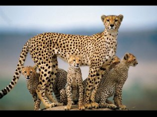 immagini-natura-animali-piu-belle-ultimi-dieci-anni-30